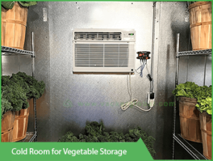 Cold Room For Vegetable Storage Www Vackerglobal Com